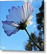 Cosmos To The Sky Metal Print