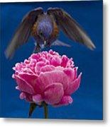 Count Bluebird Metal Print by Jean Noren