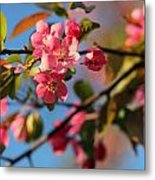 Crab Apple Metal Print