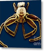 Crab Spider Metal Print