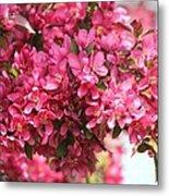 Crabapple Tree Named Prairiefire Metal Print