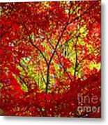 Crimson Window Metal Print