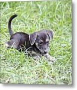 Cute Puppy In The Grass Metal Print by Jannis Werner