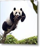 Cute Young Panda Metal Print