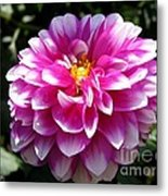 Dahlia Named Brian Ray Metal Print