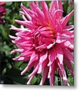 Dahlia Named Pretty In Pink Metal Print