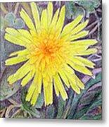 Dandelion Metal Print by Linda Pope