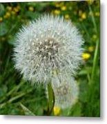 Dandelion Seed Metal Print