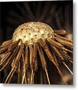 Dandelion Seeds Metal Print