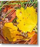 Dead Poplar Leaves Metal Print