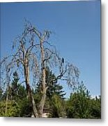 Dead Tree With Crow Metal Print