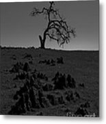 Death Of An Oak Tree Metal Print