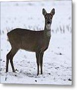 Deer In The Snow Netherlands Metal Print
