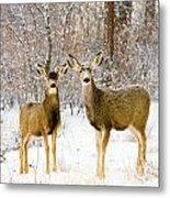 Deer In The Snowy Woods Metal Print