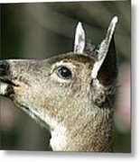 Deer Sunshine Profile Metal Print