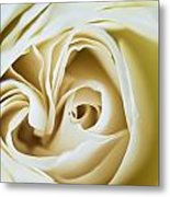 Detail Of Rose Flower Marrakech, Morocco Metal Print