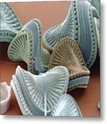 Diatom Algae, Campylodiscus Metal Print by Power And Syred