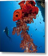 Diver Looks On At A Bright Red Soft Metal Print