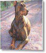 Doberman Puppy Pencil Portrait Metal Print