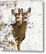 Doe Mule Deer In Snow Metal Print