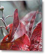 Dogwood  Autumn Metal Print
