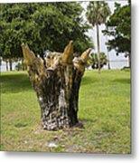 Dolphin Tree In Melbourne Beach Florida Metal Print