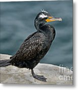 Double-crested Cormorant Metal Print