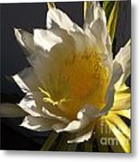 Dragon Fruit Blossom In Profile Metal Print