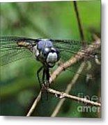 Dragonfly 71 Metal Print