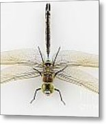 Dragonfly Isolated Metal Print
