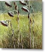 Dried Up Sunflower Patch Metal Print