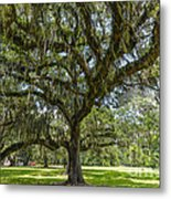 Dripping With Spanish Moss Metal Print