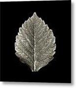Dry Leaf 1 Metal Print