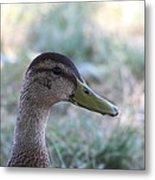 Duck - Animal - 01134 Metal Print