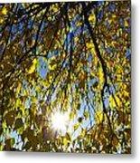 Early Autumn  Metal Print