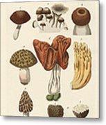 Eatable Mushrooms Metal Print