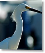 Egret Of Matlacha 2 Metal Print