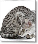 Egyptian Mau Cat Metal Print