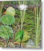 Emerald Lily Pond Metal Print