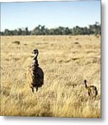 Emu Chicks Metal Print