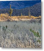 Engelmanns Prickly Pear Cactus Metal Print