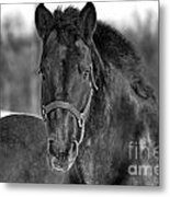 Equine Majesty Metal Print