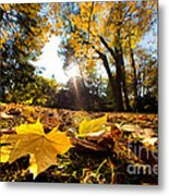 Fall Autumn Park. Falling Leaves Metal Print
