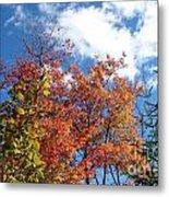 Fall Colors And Blue Sky Metal Print