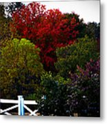 Fall Colours In Massachusetts Metal Print