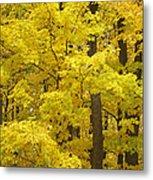 Fall Glory Metal Print