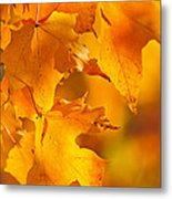 Fall Maple Leaves Metal Print