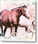 Family Of Horses Metal Print