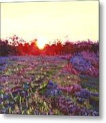 Farley Sunset Metal Print