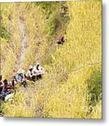 Farmers At Rice Field Metal Print